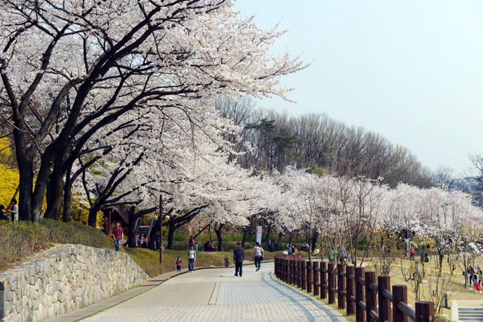 The Dream Forest is in Gangbuk-gu District, Seoul. (photo courtesy of the Korean Trails Culture Foundation)